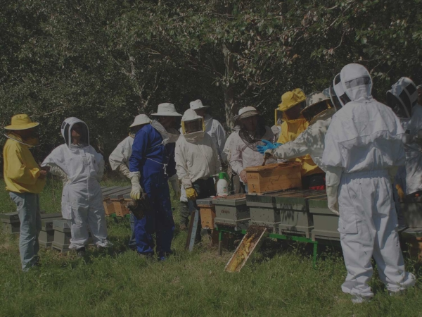 cursos apicultura