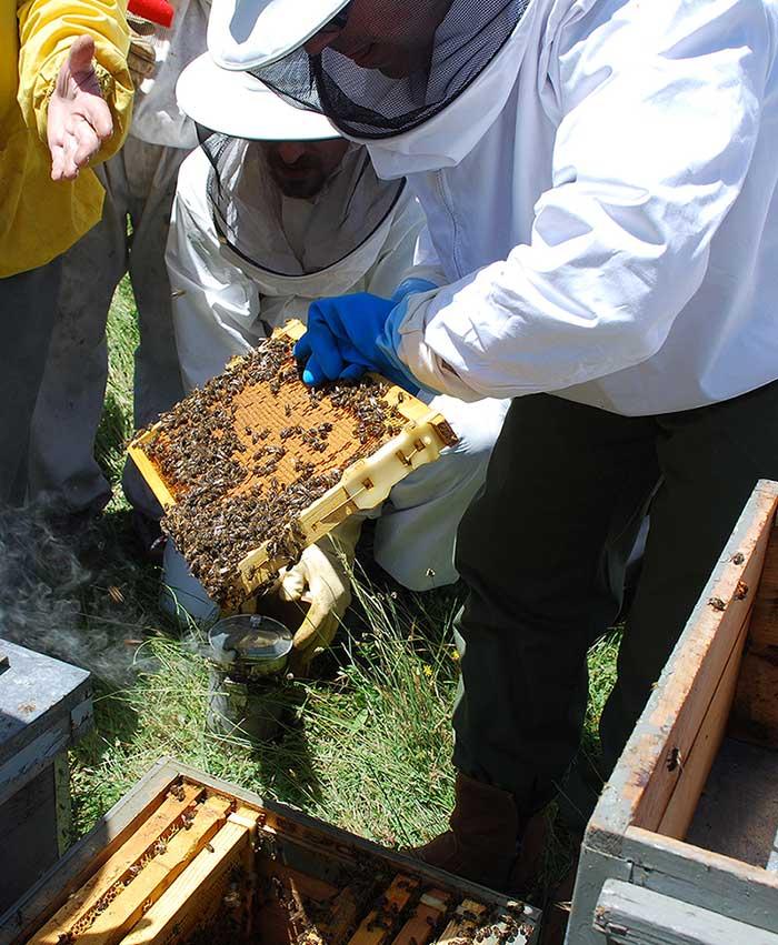 cursos apicultura aragon
